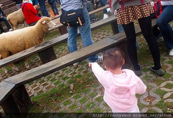 帶雪莉去清境看羊咩咩 (27)