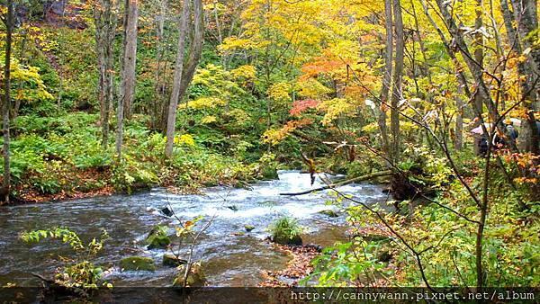 奧入瀨溪流散策 (15)