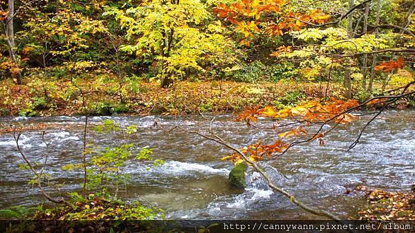奧入瀨溪流散策 (5)