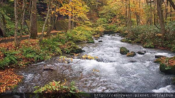 奧入瀨溪流散策 (9)