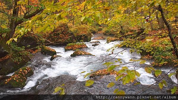 奧入瀨溪流散策 (10)
