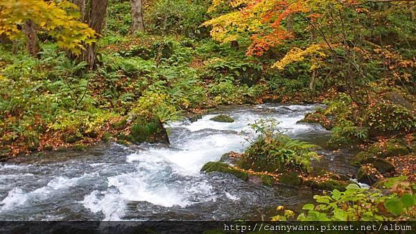 奧入瀨溪流散策 (16)