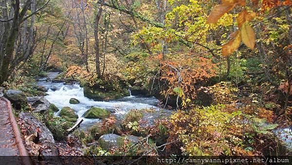 奧入瀨溪流散策 (24)