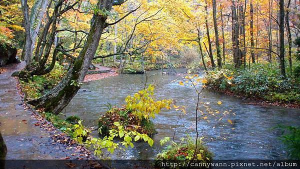 奧入瀨溪流散策 (22)