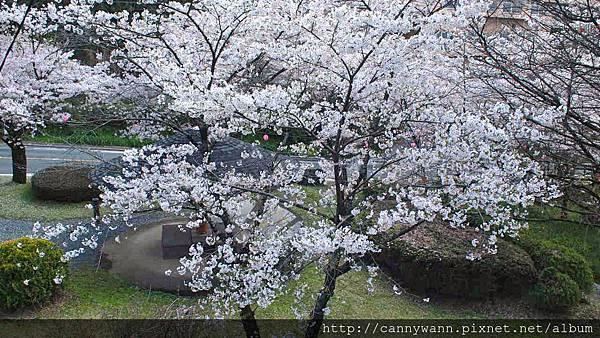 菊池公園 (7)