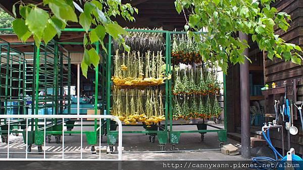 富良野富田花園農場 (11)