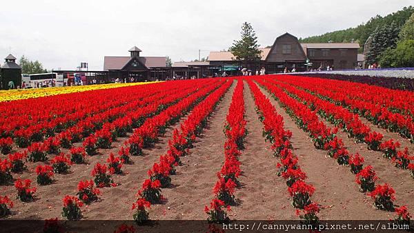 富良野富田花園農場 (9)