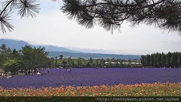 富良野富田花園農場 (1)