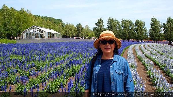 富良野富田花園農場 (6)