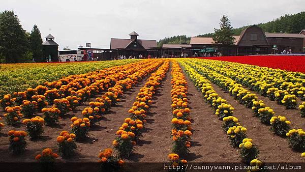 富良野富田花園農場 (10)