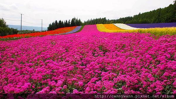 富良野富田花園農場 (19)