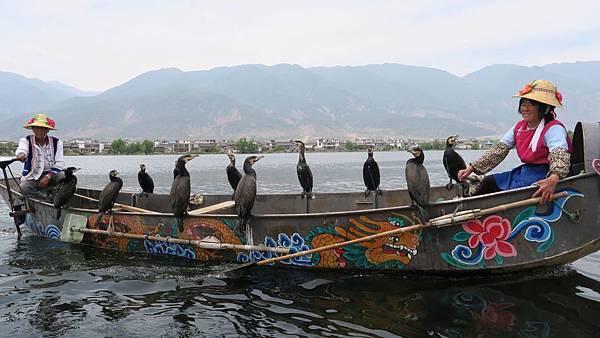 大理洱海魚鷹捕魚 (2)