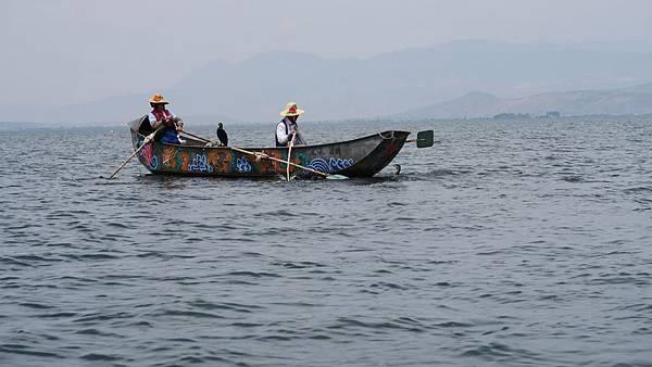大理洱海魚鷹捕魚 (4)