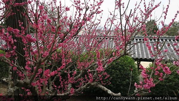 吉備津神社梅花園