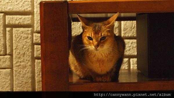 貓咪聽歌 (2).JPG