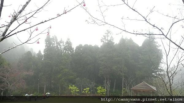 寒冬雨中的溪頭 (8).JPG