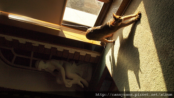 冬日午後曬太陽的貓