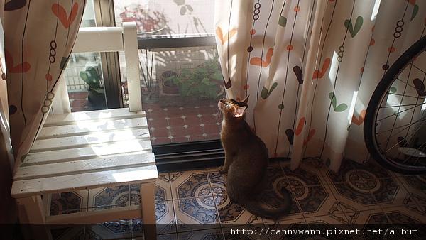 午寐的貓咪 (2).JPG