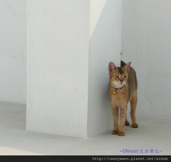 可愛小貓咪~像個優雅的芭蕾舞者