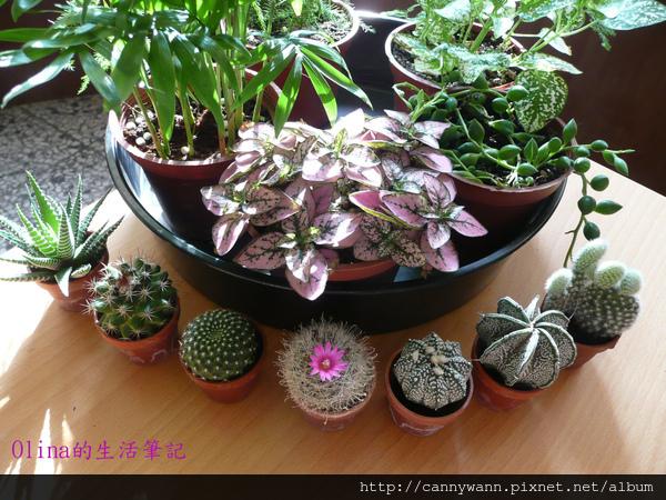 美麗的小盆栽