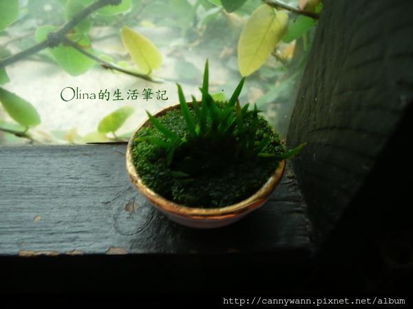 優典咖啡廳的花花草草 (6).jpg