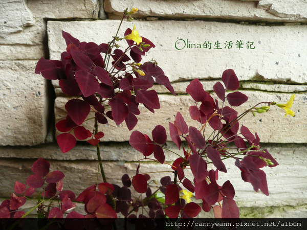 優典咖啡廳的花花草草 (11).jpg