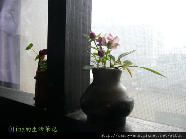 優典咖啡廳的花花草草 (20).jpg