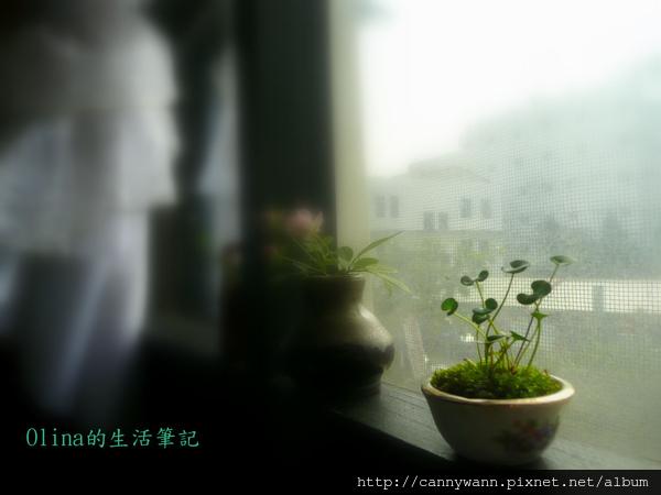 優典咖啡廳的花花草草 (21).jpg