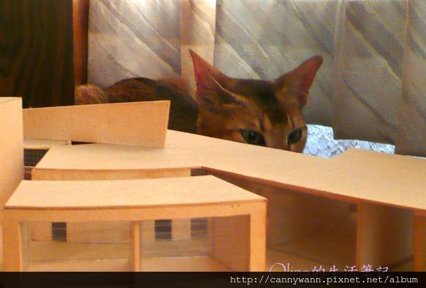 窗台上的貓和薰衣草 (3).jpg