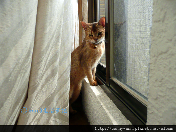 窗台上的貓和薰衣草 (4).jpg