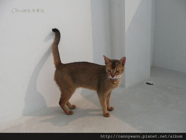 貓咪四處遊走.jpg