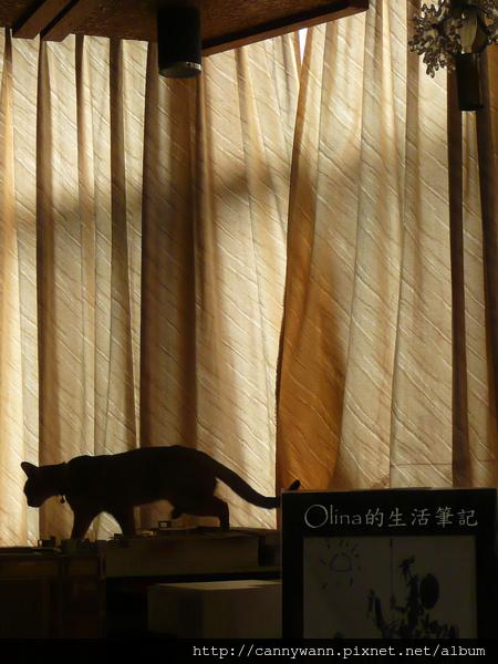 貓咪四處遊走 (1).jpg