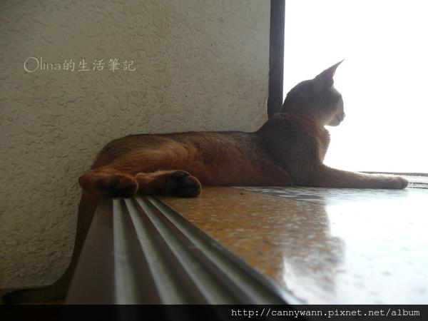貓咪四處遊走 (9).jpg