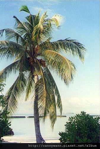 馬爾地夫~海島渡假.jpg