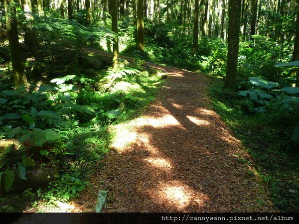 溪頭~木屑步道