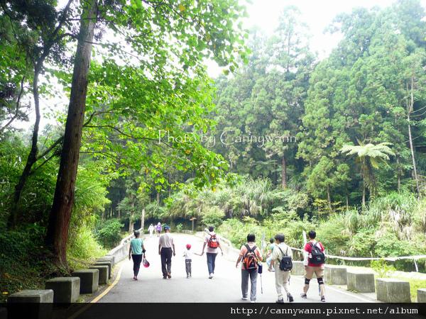 走在溪頭林道上
