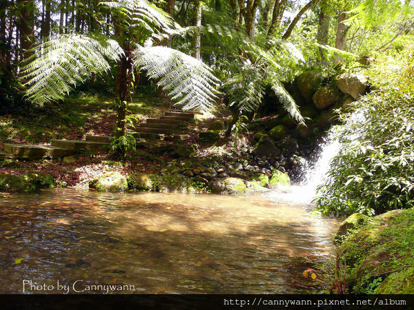 溪頭健行~森林浴