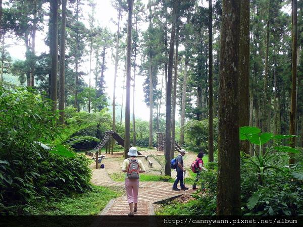 溪頭步道~森林浴