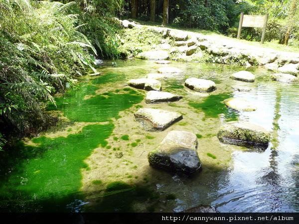溪頭森林浴