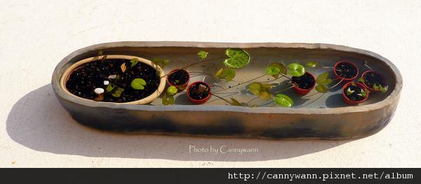 綠色的夏天 ~水生植物