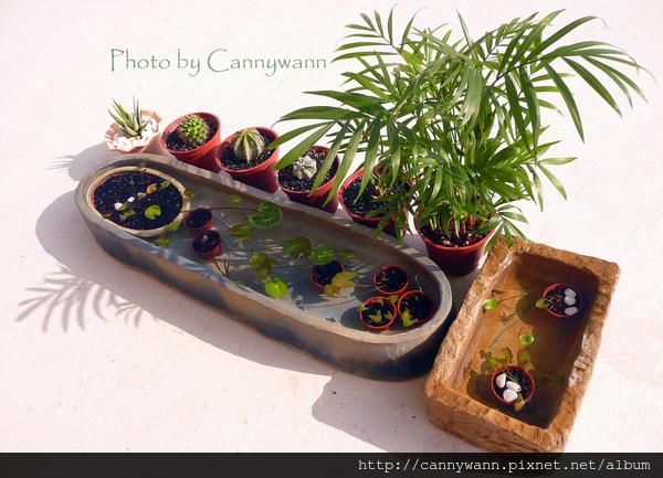 綠色的夏天 ~仙人掌&水生植物
