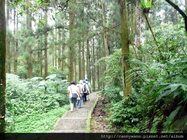 溪頭森林浴步道.jpg