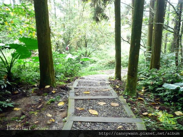 溪頭森林浴步道 (1).jpg