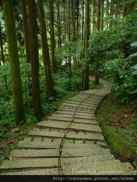 溪頭森林浴步道 (4).jpg