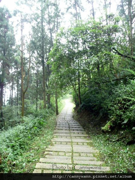溪頭森林浴步道 (5).jpg