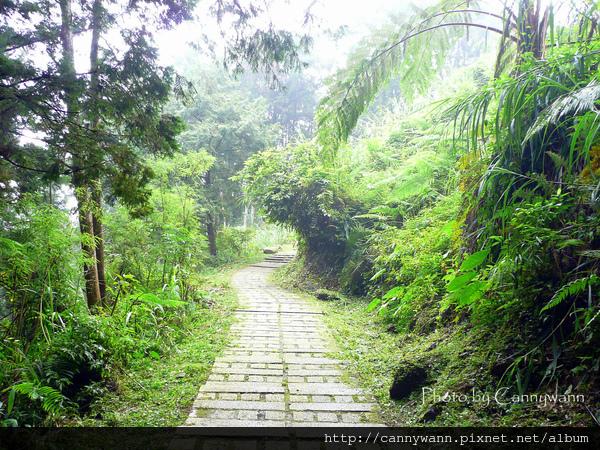 溪頭森林浴步道 (6).jpg