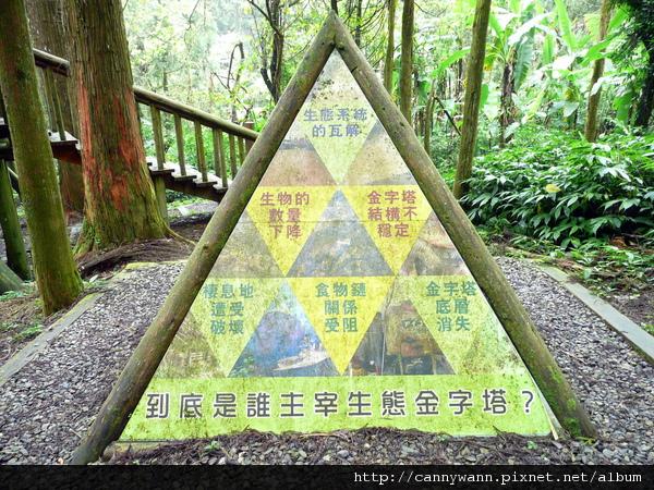 溪頭森林探索區 (2).jpg