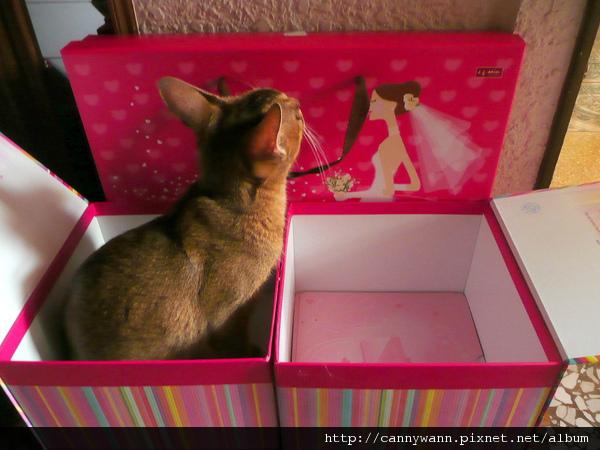 小貓咪禮盒 (3).jpg