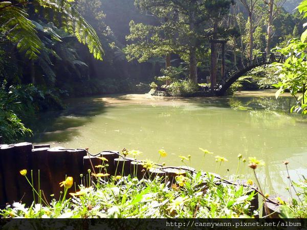 幽靜的池水