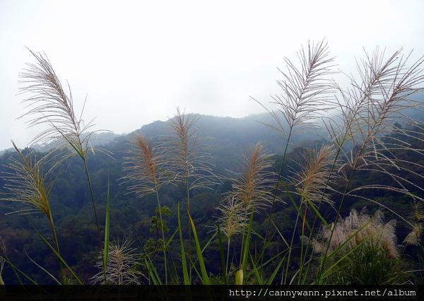 秋景 (5).jpg